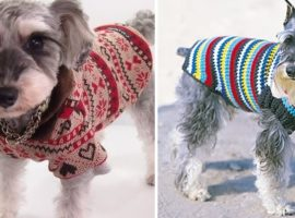 Creative pet design ideas: Knitted clothes for cats & dogs