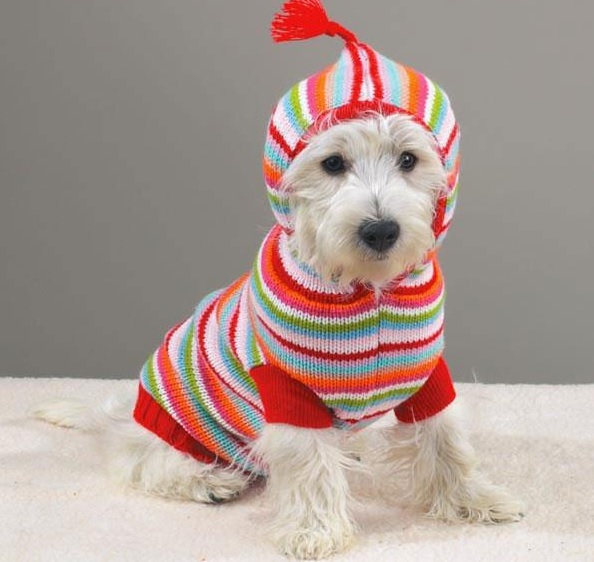 Knitted warm hats and clothes for dogs
